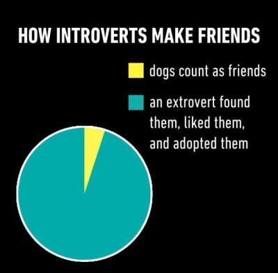 intovert 11